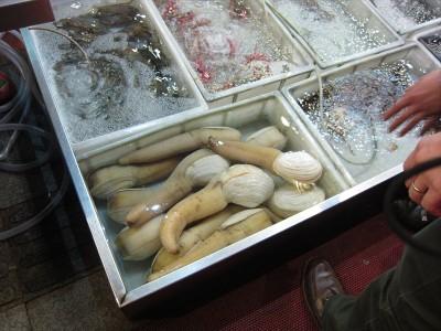 不気味な貝